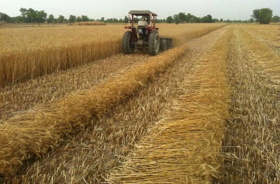 multi crop reaper